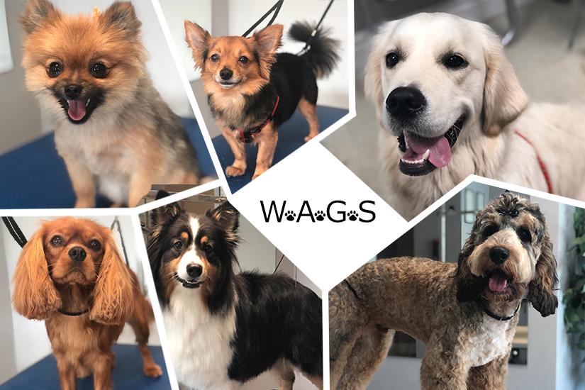 W.A.G.S_header_image2